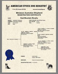 ASDR Registration